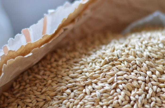 comment faire du malt d'orge grain-sec-malt-cereales920x540.jpg